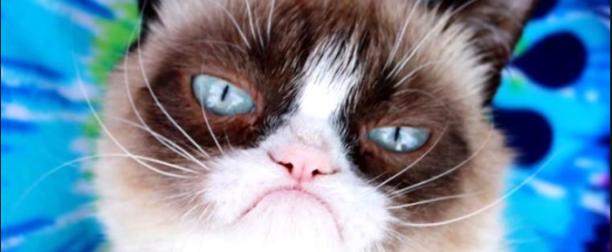 Fallece Grumpy Cat, la gata enojona del internet.